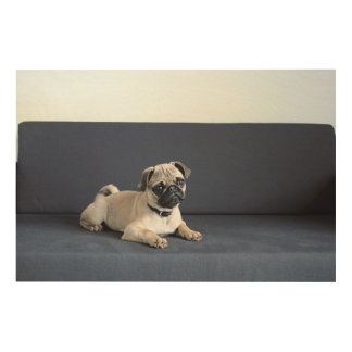 Puppy On Lounging Couch Wood Print