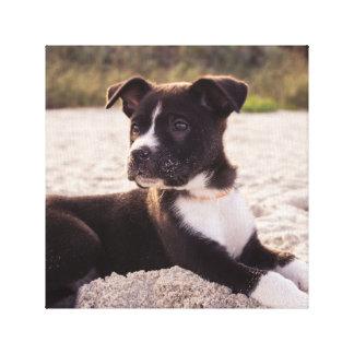 Puppy On The Beach Canvas Print