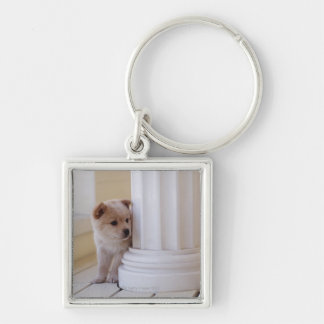 Puppy peeking out from behind a column key ring