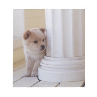 Puppy peeking out from behind a column notepad
