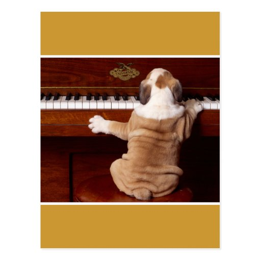 Puppy Pianist Post Cards