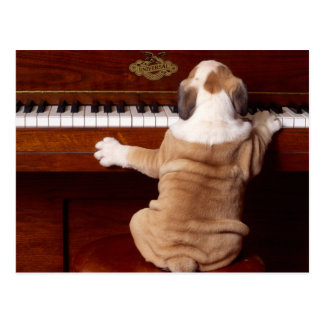 Puppy Pianist Postcard