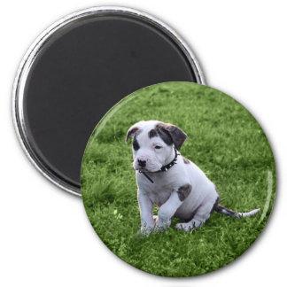Puppy Pit Bull T-Bone Magnet