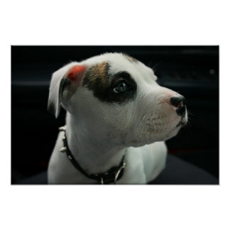 Puppy Pit Bull T-Bone Poster