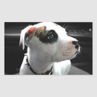 Puppy Pit Bull T-Bone Rectangular Sticker