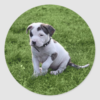 Puppy Pit Bull T-Bone Round Sticker