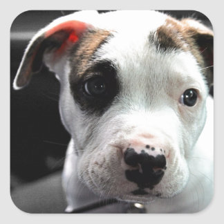 Puppy Pit Bull T-Bone Square Sticker