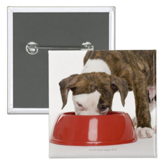 Puppy pitbull eating out of dish 15 cm square badge