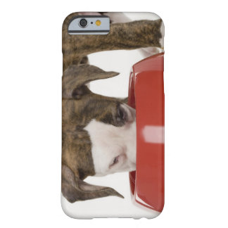 Puppy pitbull eating out of dish barely there iPhone 6 case