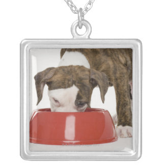 Puppy pitbull eating out of dish silver plated necklace