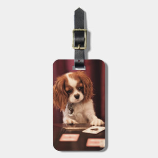 Puppy plays with cards on coffee table. bag tag