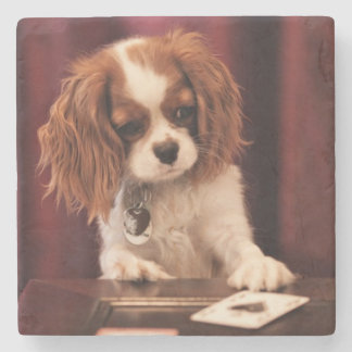 Puppy plays with cards on coffee table. stone coaster