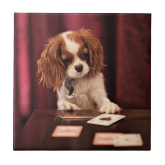 Puppy plays with cards on coffee table. tile