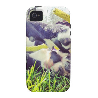 Puppy playtime iPhone 4/4S case