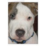 Puppy Polo Card
