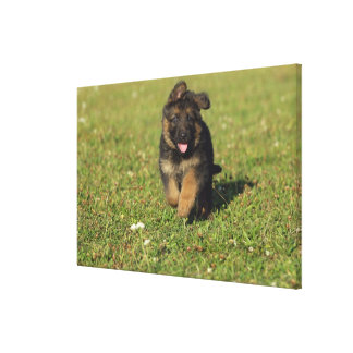 Puppy Running Stretched Canvas Print