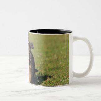 Puppy Running Two-Tone Coffee Mug