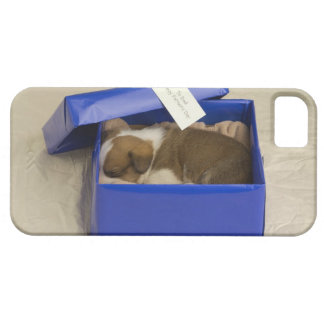 Puppy sleeping in a gift box iPhone 5 case