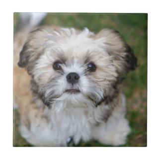 Puppy Small Square Tile