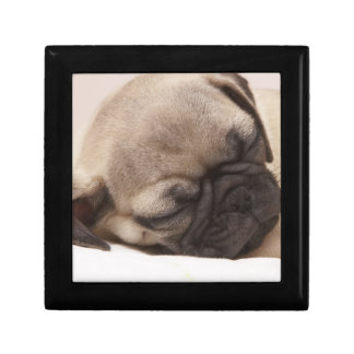Puppy Soundly Sleeping Small Square Gift Box