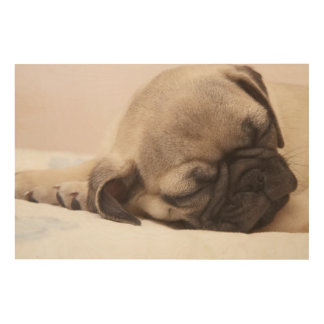 Puppy Soundly Sleeping Wood Print