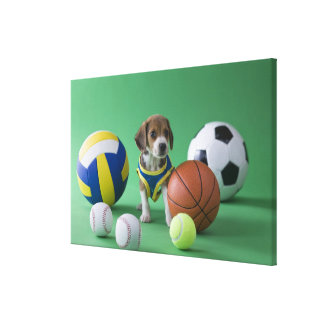 Puppy surrounded by sport balls canvas print