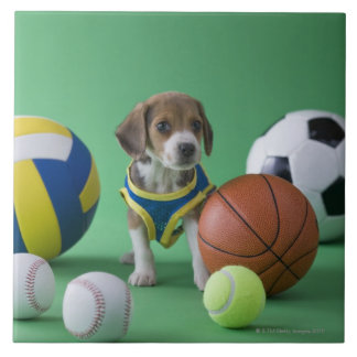 Puppy surrounded by sport balls tile
