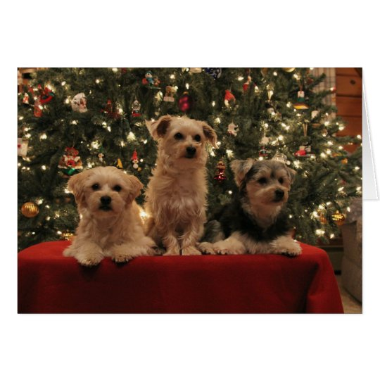 Puppy Trio Christmas Card
