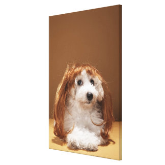 Puppy wearing ginger wig canvas print