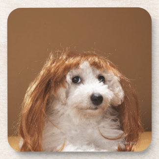 Puppy wearing ginger wig coaster