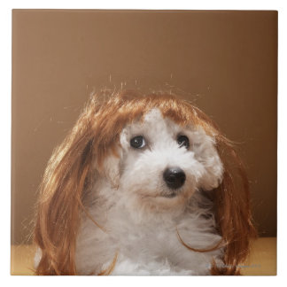 Puppy wearing ginger wig tile