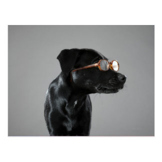 Puppy wearing glasses postcard