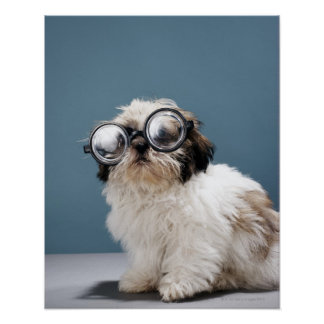 Puppy wearing thick glasses poster