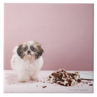 Puppy with cake on floor tile