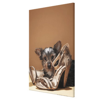 Puppy with damaged shoe stretched canvas prints
