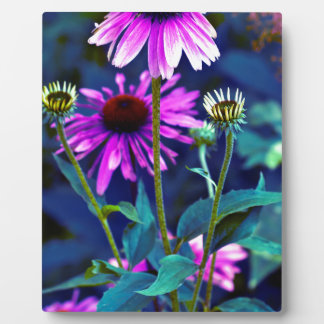 PUR-polarize Coneflowers Display Plaques