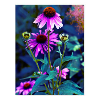 PUR-polarize Coneflowers Postcard