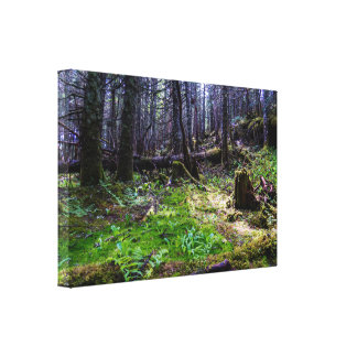Pure Canadian Forest Canvas Print