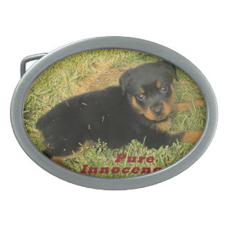 pure innocence rottweiler puppy oval belt buckle