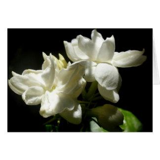 Pure Jasmine Card