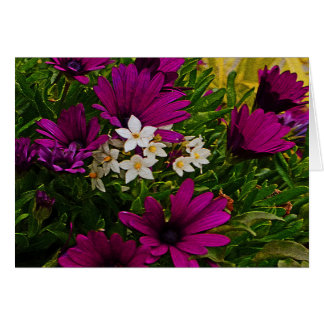 "PURPLE AFRICAN CAPE DAISY AND DAINTY WHITE ""STAR-S CARD"