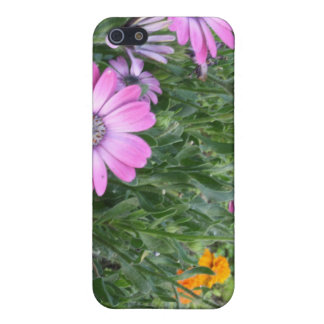 Purple African Daisies, Perhaps? Case For iPhone 5