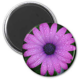 Purple African Daisy with Raindrops 6 Cm Round Magnet
