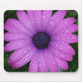 Purple African Daisy with Raindrops Mouse Pad