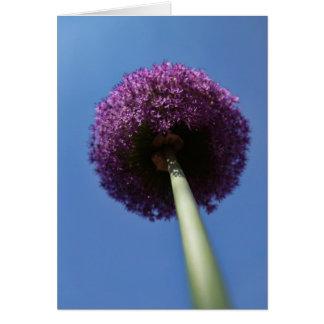 Purple Allium Flower Cards