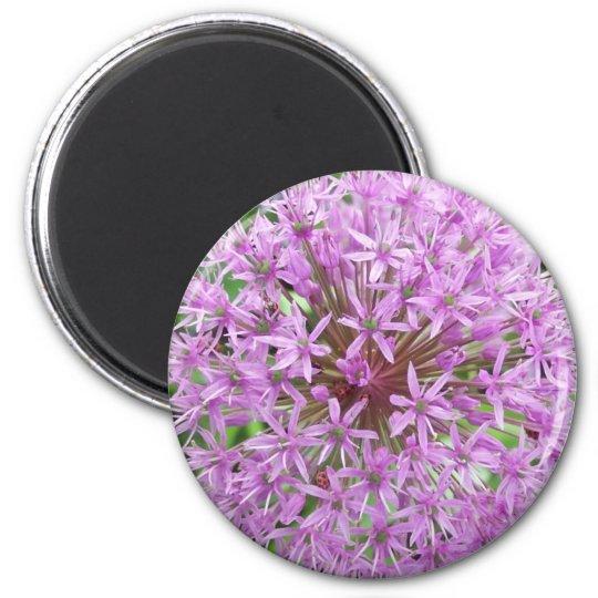 Purple Allium Magnet
