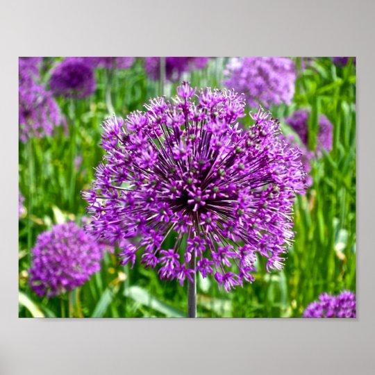 Purple Allium, Poster