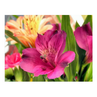 Purple Alstroemeria Flower Lilies Flowers Photo Postcard