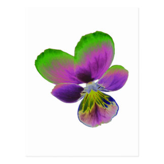 Purple and Green Pansy Postcard