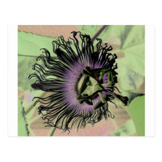 Purple and Green Passion Flower Bloom Postcard